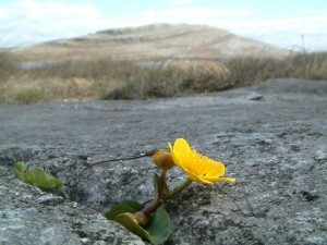 Flora en el Parque Nacional de Burren