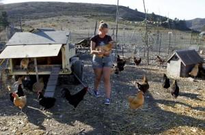 granja-gallinas